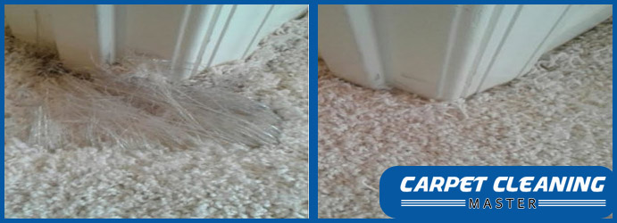 Carpet Pet Damage Repair Paddington