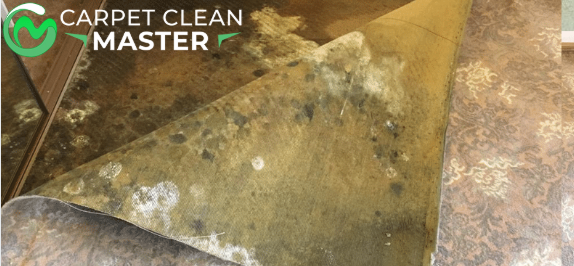 Carpet Mould Removal Tallebudgera Valley